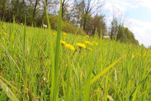 Kräuterwanderung-Grüne-Wiese