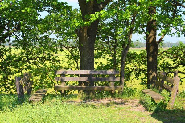 Kräuterwanderung-Holzbank
