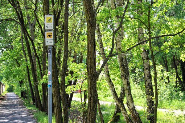 Lausitzer-Radwandertage-Gurken-Radweg